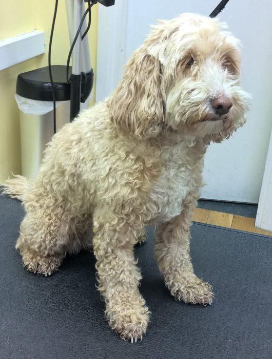 Dog Grooming Leeds