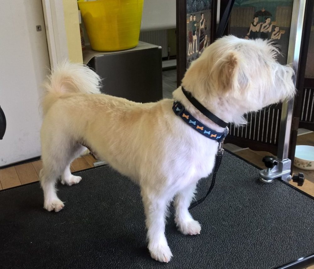 mixed-breed-leeds-dog-grooming-after